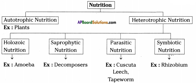AP SSC 10th Class Biology Important Questions Chapter 1 Nutrition 12