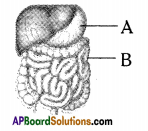 AP SSC 10th Class Biology Important Questions Chapter 1 Nutrition 3