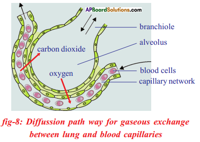 AP SSC 10th Class Biology Important Questions Chapter 2 Respiration 23