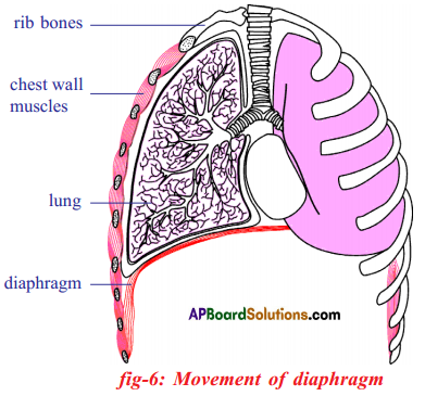 AP SSC 10th Class Biology Important Questions Chapter 2 Respiration 26