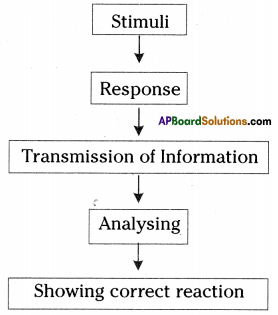 AP SSC 10th Class Biology Important Questions Chapter 5 Coordination 9