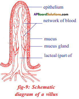 AP SSC 10th Class Biology Important Questions Chapter 7 Coordination in Life Processes 8