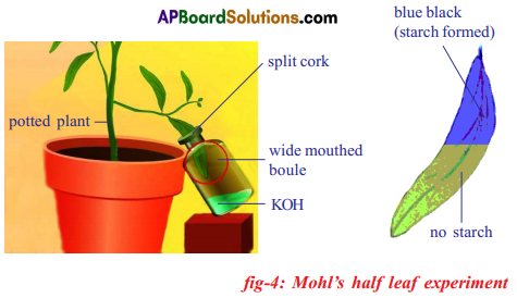 AP SSC 10th Class Biology Solutions Chapter 1 Nutrition – Food Supplying System 20