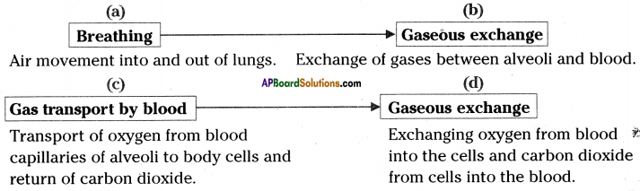 AP SSC 10th Class Biology Solutions Chapter 2 Respiration - The Energy Releasing System 14