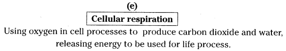 AP SSC 10th Class Biology Solutions Chapter 2 Respiration - The Energy Releasing System 15