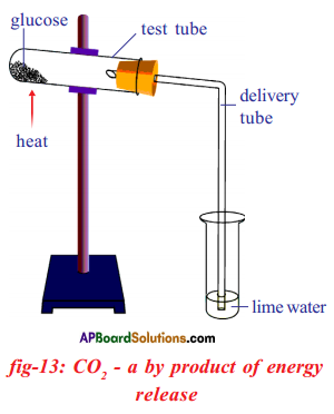 AP SSC 10th Class Biology Solutions Chapter 2 Respiration - The Energy Releasing System 17
