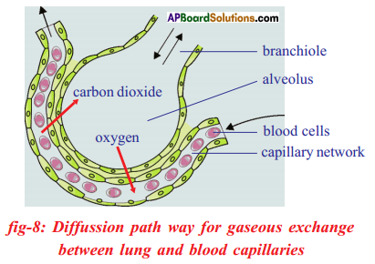 AP SSC 10th Class Biology Solutions Chapter 2 Respiration - The Energy Releasing System 8