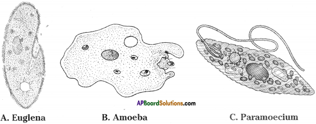AP Board 9th Class Biology Important Questions Chapter 1 Cell its Structure and Functions Important Questions 7
