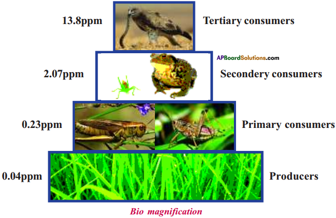 AP Board 9th Class Biology Important Questions Chapter 10 Soil Pollution 5