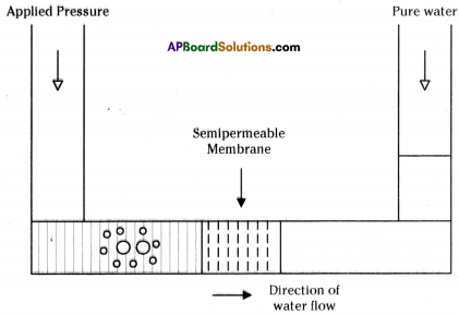 AP Board 9th Class Biology Important Questions Chapter 4 Movement of Materials Across the Cell Membrane 2