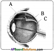 AP Board 9th Class Biology Important Questions Chapter 6 Sense Organs 7