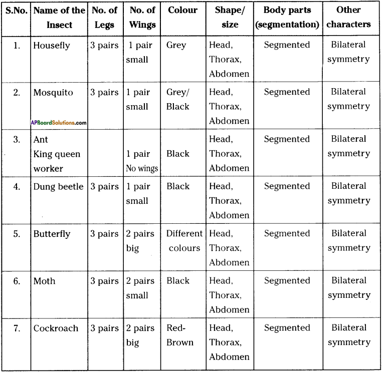 AP Board 9th Class Biology Solutions Chapter 5 Diversity in Living Organism 9