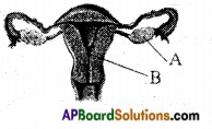 AP Board 8th Class Biology Important Questions Chapter 4 Reproduction in Animals 8