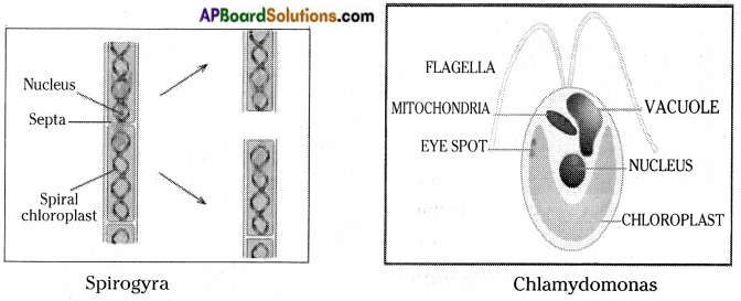 AP Board 8th Class Biology Solutions Chapter 3 Story of Microorganisms I 1