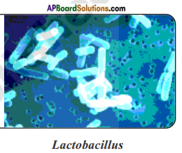 AP Board 8th Class Biology Solutions Chapter 3 Story of Microorganisms I 2
