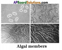 AP Board 8th Class Biology Solutions Chapter 3 Story of Microorganisms I 7
