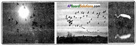 AP Board 8th Class Biology Solutions Chapter 6 Biodiversity and its Conservation 11