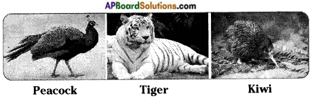 AP Board 8th Class Biology Solutions Chapter 6 Biodiversity and its Conservation 8