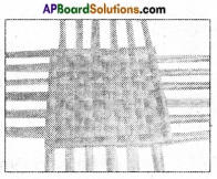 AP Board 6th Class Science Solutions Chapter 8 How Fabrics are Made 6