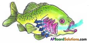 AP Board 7th Class Science Important Questions Chapter 11 Respiration in Organisms 1
