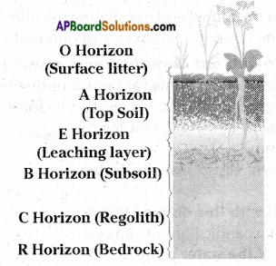 AP Board 7th Class Science Important Questions Chapter 15 Soil Our Life 4