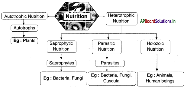 AP Board 10th Class Biology Notes Chapter 1 Nutrition 3