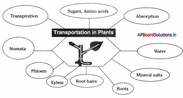 AP Board 10th Class Biology Notes Chapter 3 Transportation 2