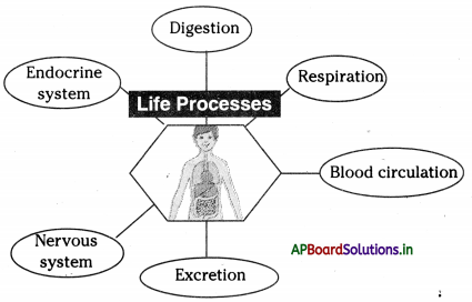 AP Board 10th Class Biology Notes Chapter 7 Coordination in Life Processes 1