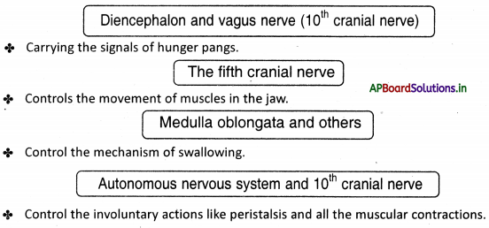 AP Board 10th Class Biology Notes Chapter 7 Coordination in Life Processes 3