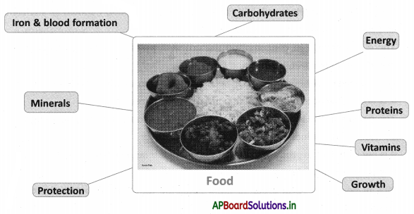 AP Board 10th Class Social Studies Notes Chapter 11 Food Security 1