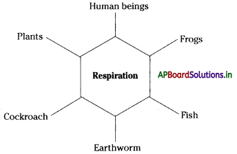 AP Board 7th Class Science Notes Chapter 11 Respiration in Organisms 1