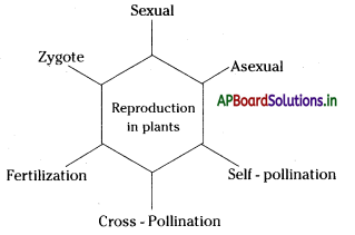 AP Board 7th Class Science Notes Chapter 12 Reproduction in Plants 1