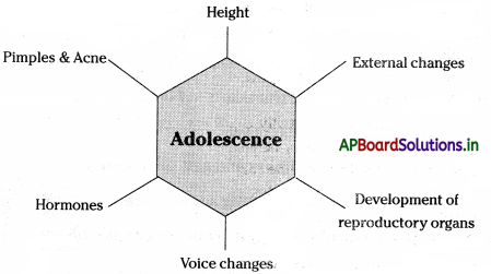 AP Board 8th Class Biology Notes Chapter 5 Attaining the Age of Adolescence 1