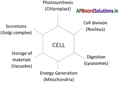 AP Board 9th Class Biology Notes Chapter 1 Cell its Structure and Functions 2