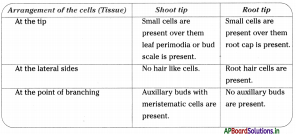 AP Board 9th Class Biology Notes Chapter 2 Plant Tissues 1