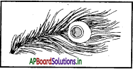 AP Board 7th Class Hindi Solutions Chapter 9 गुसाडी 5